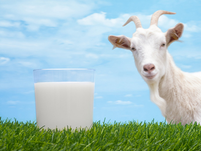 Goat-and-glassofmilk