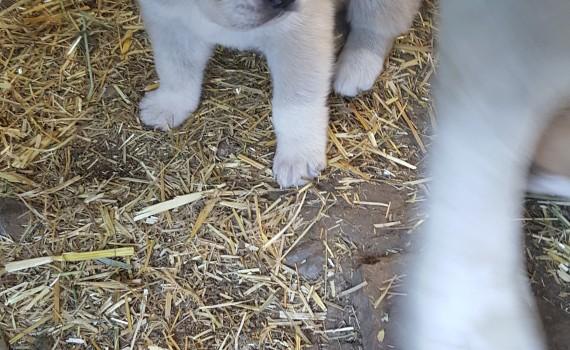 puppies (4)