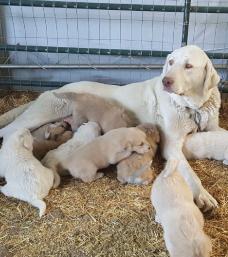 Family Farm Visit 2018